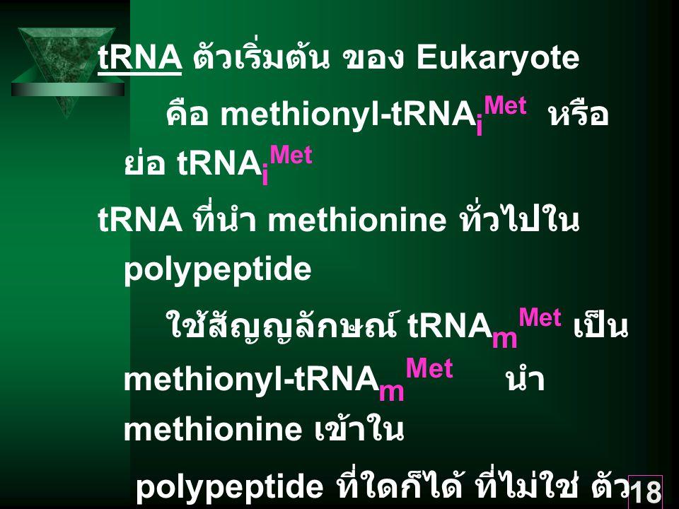 18 tRNA ตัวเริ่มต้น ของ Eukaryote คือ methionyl-tRNA i Met หรือ ย่อ tRNA i Met tRNA ที่นำ methionine ทั่วไปใน polypeptide ใช้สัญญลักษณ์ tRNA m Met เป็น methionyl-tRNA m Met นำ methionine เข้าใน polypeptide ที่ใดก็ได้ ที่ไม่ใช่ ตัว เริ่มต้นของสาย polypeptide