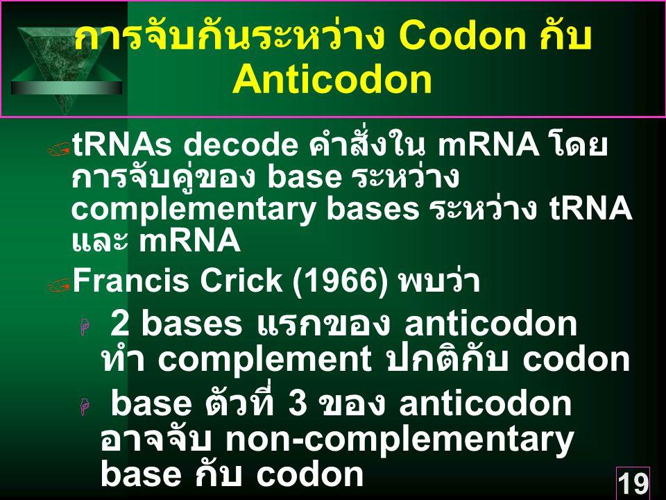 19 การจับกันระหว่าง Codon กับ Anticodon  tRNAs decode คำสั่งใน mRNA โดย การจับคู่ของ base ระหว่าง complementary bases ระหว่าง tRNA และ mRNA  Francis Crick (1966) พบว่า  2 bases แรกของ anticodon ทำ complement ปกติกับ codon  base ตัวที่ 3 ของ anticodon อาจจับ non-complementary base กับ codon