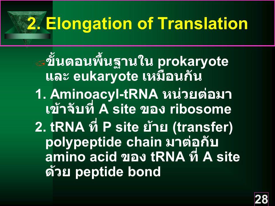 28 2.Elongation of Translation  ขั้นตอนพื้นฐานใน prokaryote และ eukaryote เหมือนกัน 1.