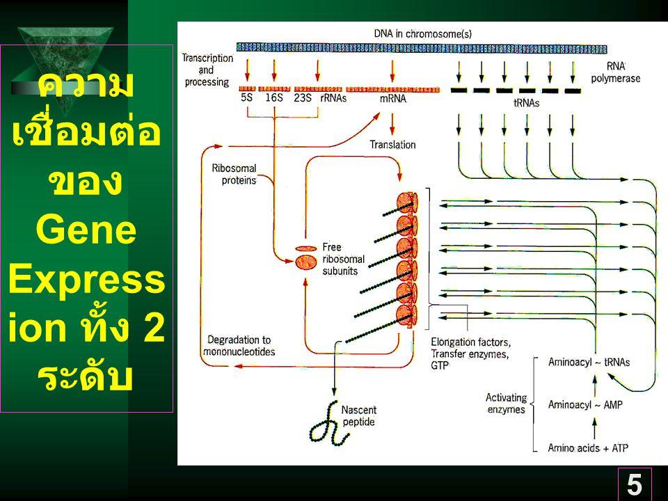 5 ความ เชื่อมต่อ ของ Gene Express ion ทั้ง 2 ระดับ