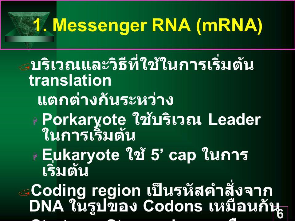 6 1. Messenger RNA (mRNA)  บริเวณและวิธีที่ใช้ในการเริ่มต้น translation แตกต่างกันระหว่าง  Porkaryote ใช้บริเวณ Leader ในการเริ่มต้น  Eukaryote ใช้