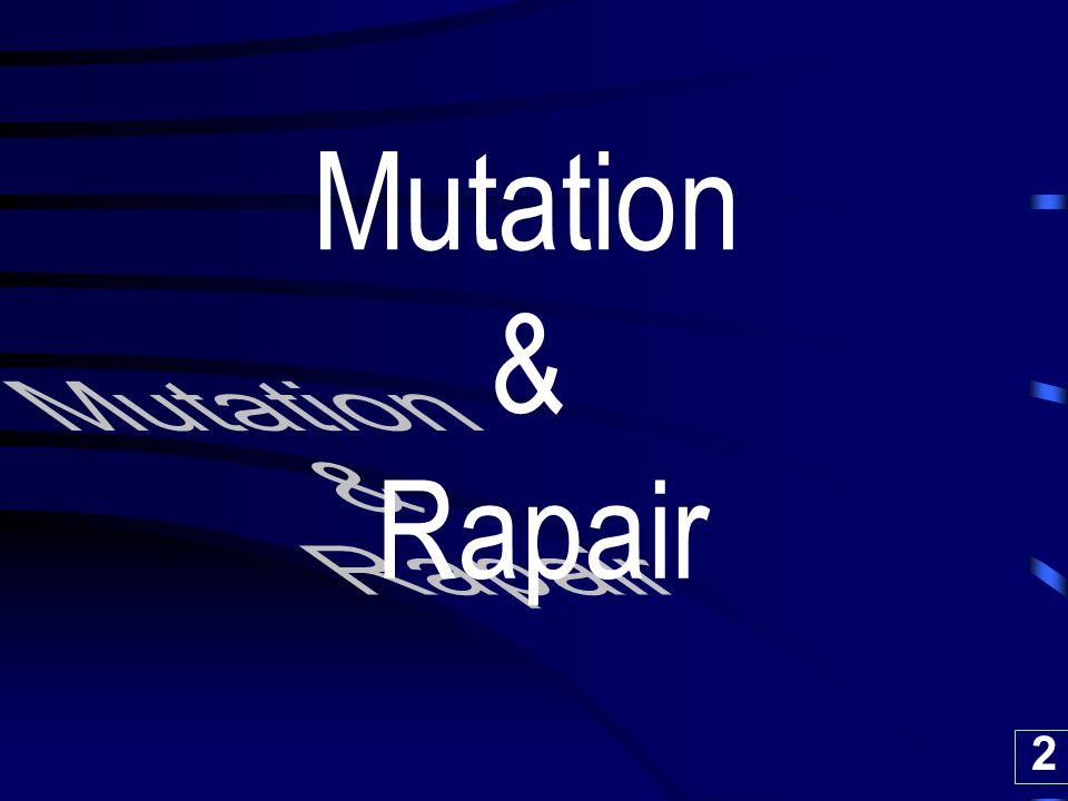 33 1. Spontaneous Mutation