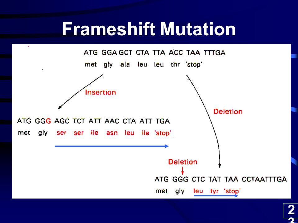 23 Frameshift Mutation