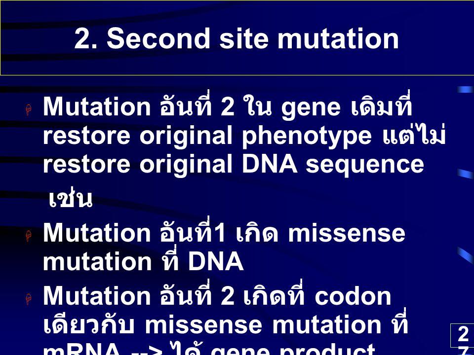 27 2. Second site mutation  Mutation อันที่ 2 ใน gene เดิมที่ restore original phenotype แต่ไม่ restore original DNA sequence เช่น  Mutation อันที่