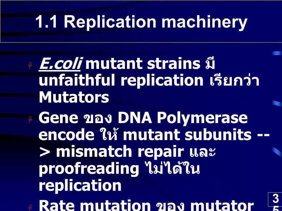 35 1.1 Replication machinery  E.coli mutant strains มี unfaithful replication เรียกว่า Mutators  Gene ของ DNA Polymerase encode ให้ mutant subunits