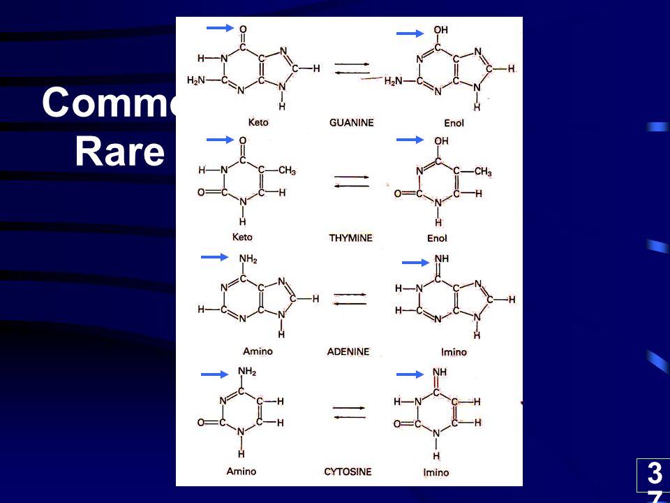 37 Common Rare