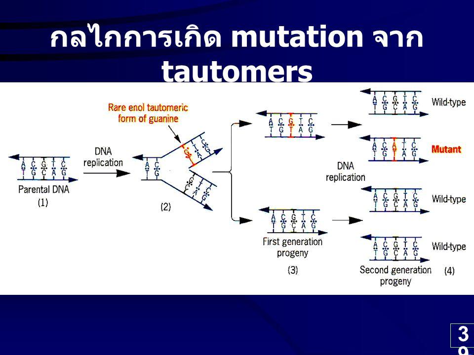 39 กลไกการเกิด mutation จาก tautomers