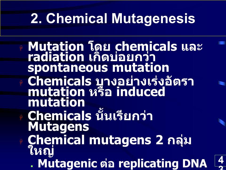 43 2. Chemical Mutagenesis  Mutation โดย chemicals และ radiation เกิดบ่อยกว่า spontaneous mutation  Chemicals บางอย่างเร่งอัตรา mutation หรือ induce