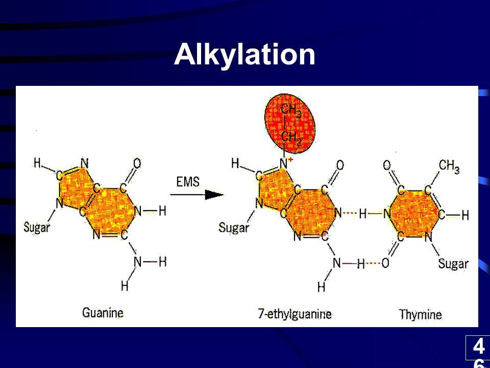 46 Alkylation