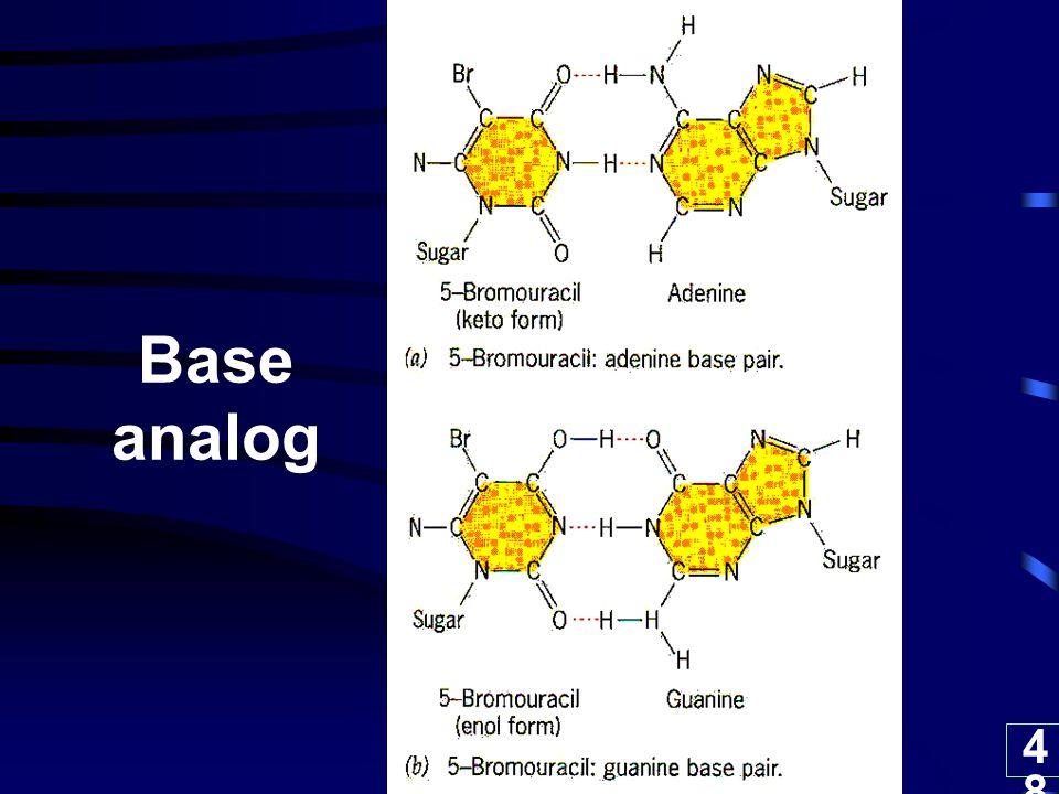 48 Base analog