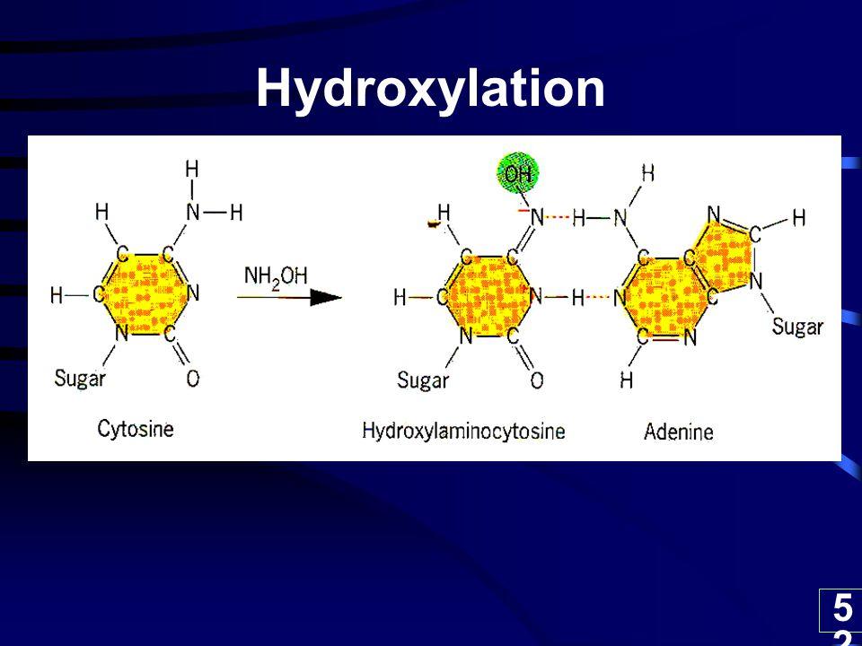 52 Hydroxylation