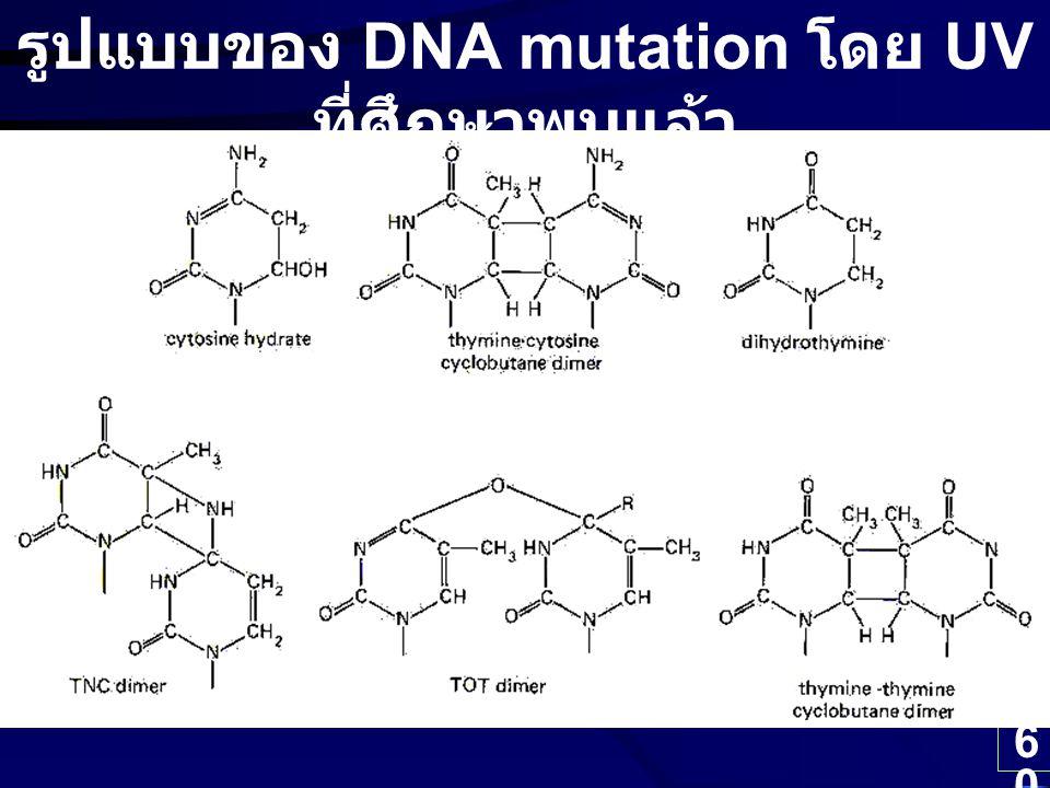 60 รูปแบบของ DNA mutation โดย UV ที่ศึกษาพบแล้ว