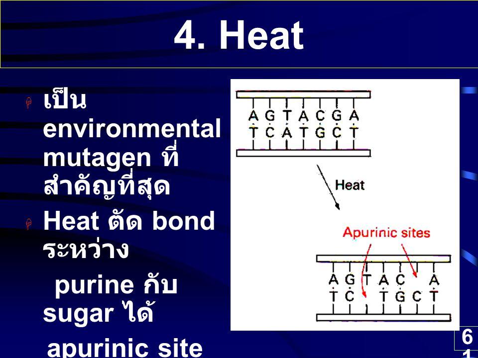 61 4. Heat  เป็น environmental mutagen ที่ สำคัญที่สุด  Heat ตัด bond ระหว่าง purine กับ sugar ได้ apurinic site ได้ถึง 10,000 sites ต่อ 1 cell ต่อ