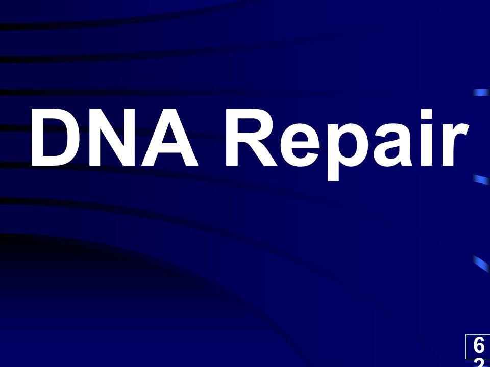 62 DNA Repair