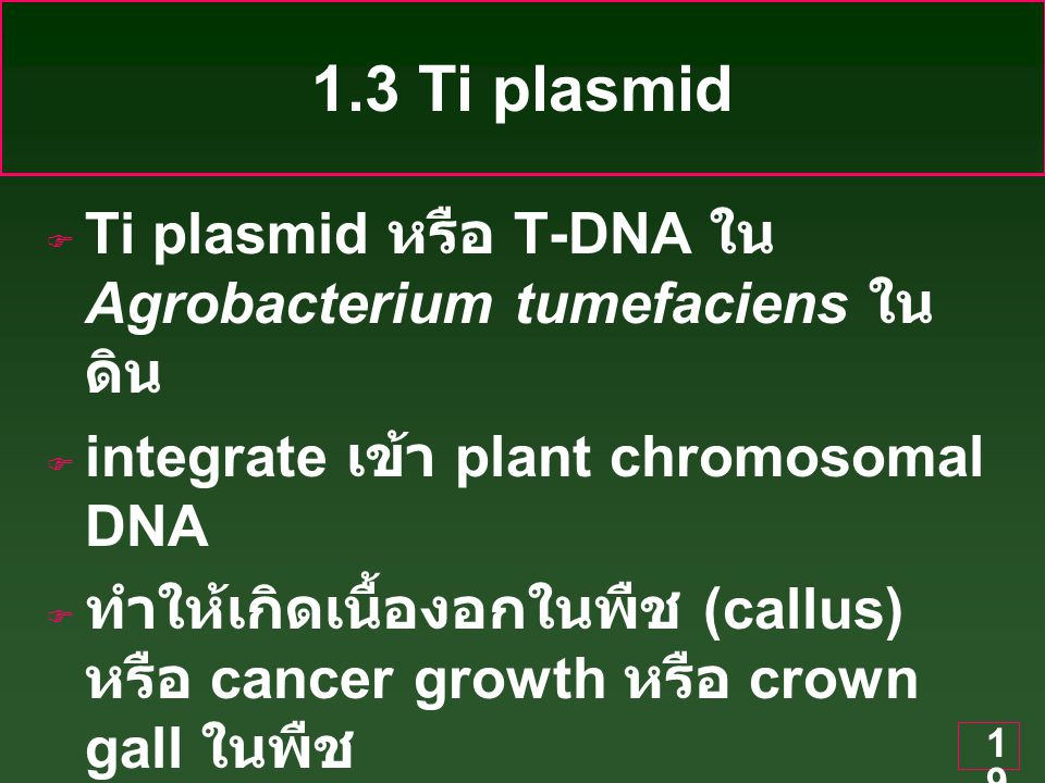 19  Ti plasmid หรือ T-DNA ใน Agrobacterium tumefaciens ใน ดิน  integrate เข้า plant chromosomal DNA  ทำให้เกิดเนื้องอกในพืช (callus) หรือ cancer growth หรือ crown gall ในพืช 1.3 Ti plasmid