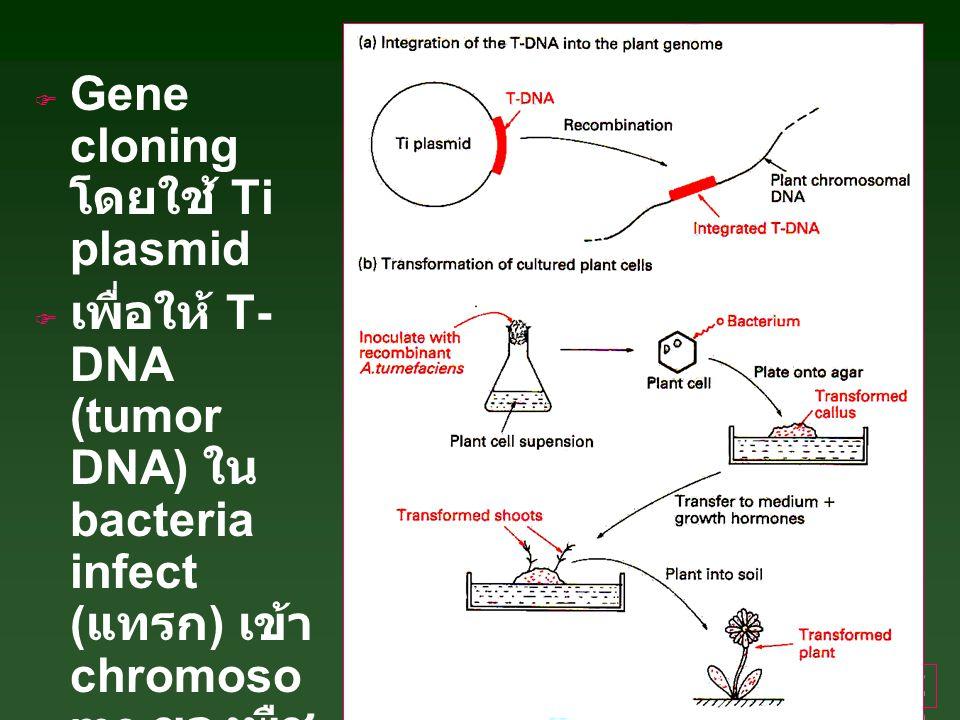 20  Gene cloning โดยใช้ Ti plasmid  เพื่อให้ T- DNA (tumor DNA) ใน bacteria infect ( แทรก ) เข้า chromoso me ของพืช --> crown gall --> ชัก นำให้เจริญ เป็นต้นพืช