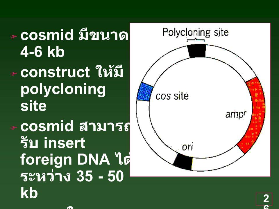 26  cosmid มีขนาด 4-6 kb  construct ให้มี polycloning site  cosmid สามารถ รับ insert foreign DNA ได้ ระหว่าง 35 - 50 kb  เหมาะในการ clone gene ขนาดใหญ่ของ eukaryote