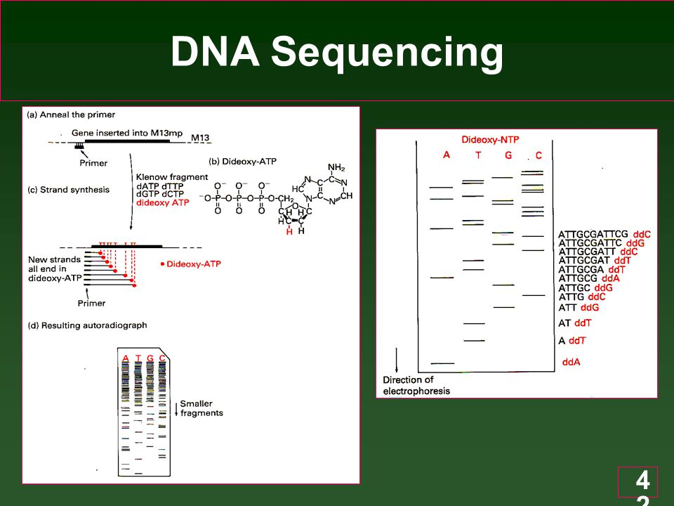 42 DNA Sequencing