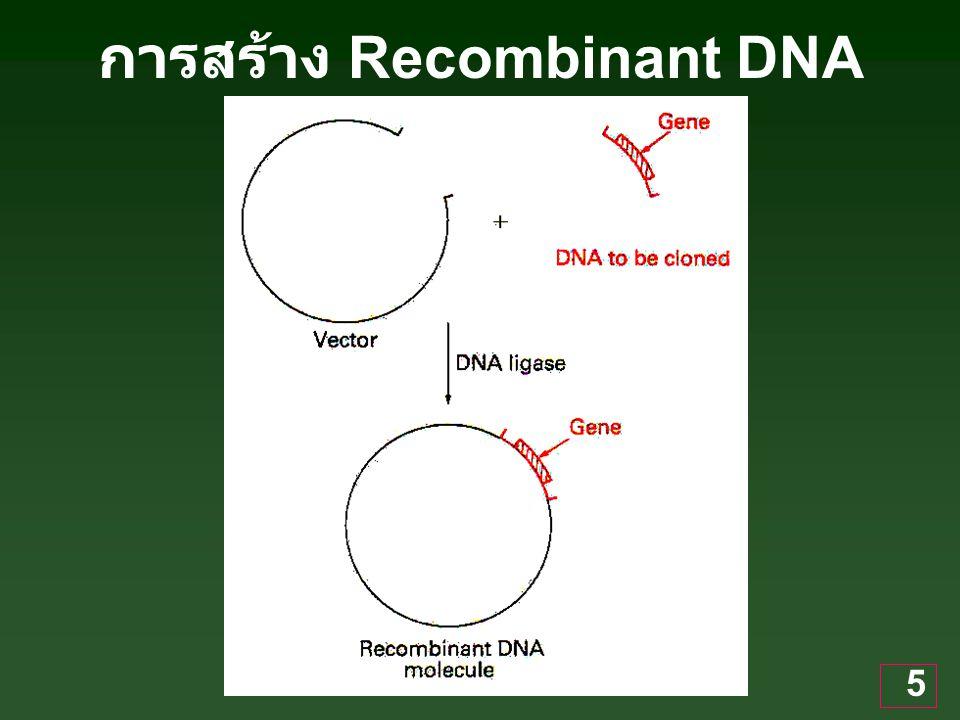 5 การสร้าง Recombinant DNA