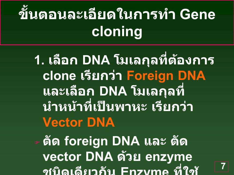 7 ขั้นตอนละเอียดในการทำ Gene cloning 1.