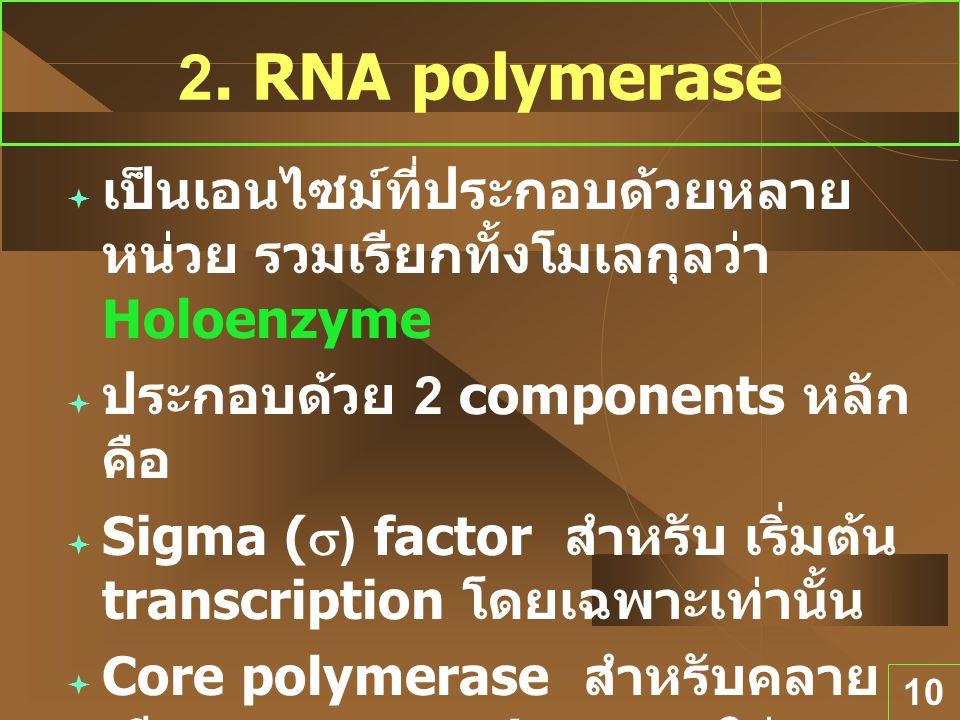 10 2. RNA polymerase  เป็นเอนไซม์ที่ประกอบด้วยหลาย หน่วย รวมเรียกทั้งโมเลกุลว่า Holoenzyme  ประกอบด้วย 2 components หลัก คือ  Sigma (  ) factor สำ