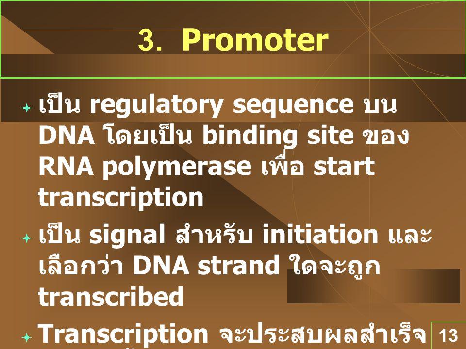 13 3. Promoter  เป็น regulatory sequence บน DNA โดยเป็น binding site ของ RNA polymerase เพื่อ start transcription  เป็น signal สำหรับ initiation และ