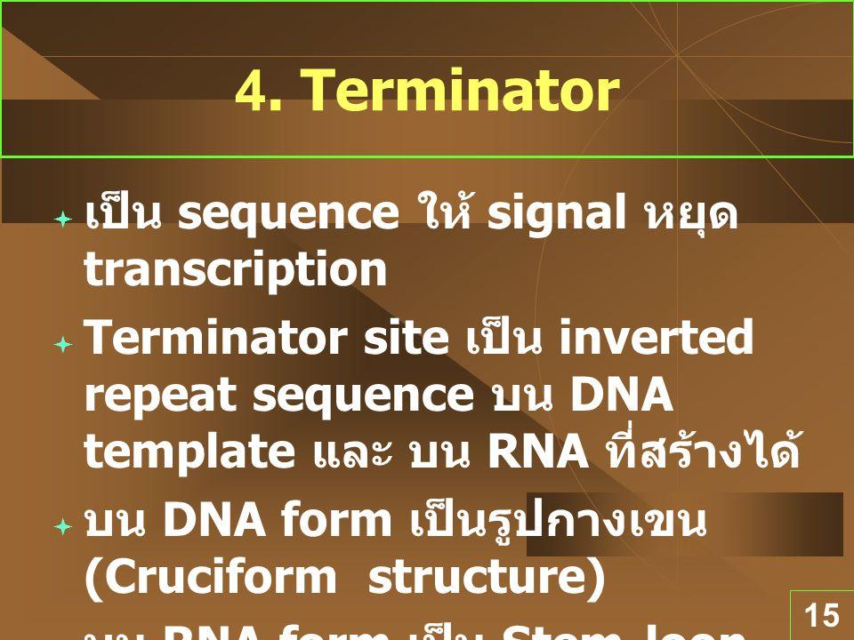 15 4. Terminator  เป็น sequence ให้ signal หยุด transcription  Terminator site เป็น inverted repeat sequence บน DNA template และ บน RNA ที่สร้างได้