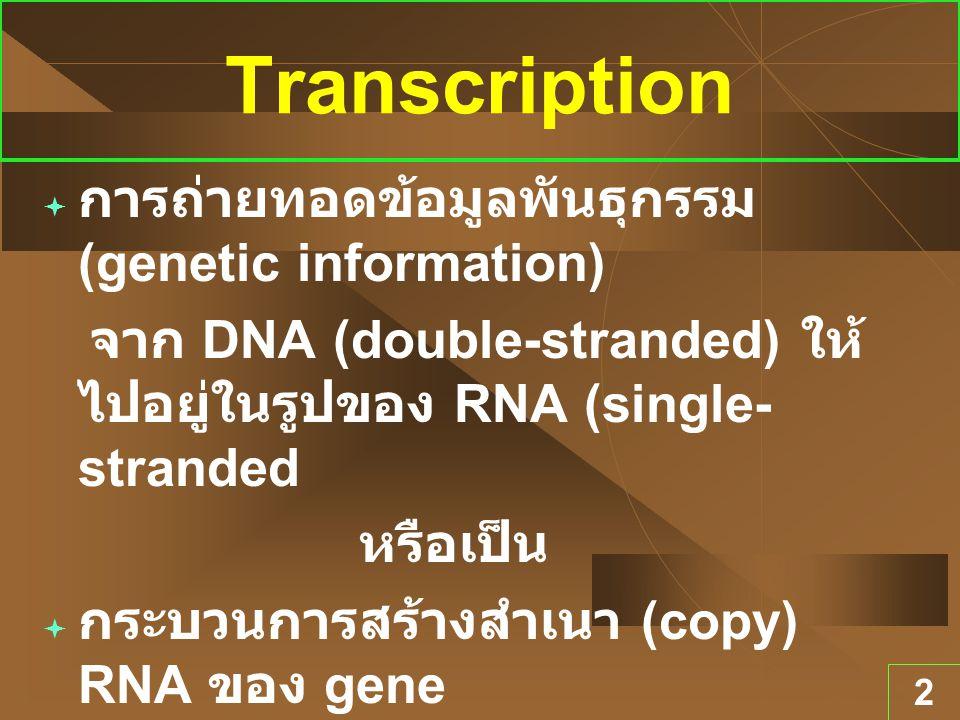 2 Transcription  การถ่ายทอดข้อมูลพันธุกรรม (genetic information) จาก DNA (double-stranded) ให้ ไปอยู่ในรูปของ RNA (single- stranded หรือเป็น  กระบวน