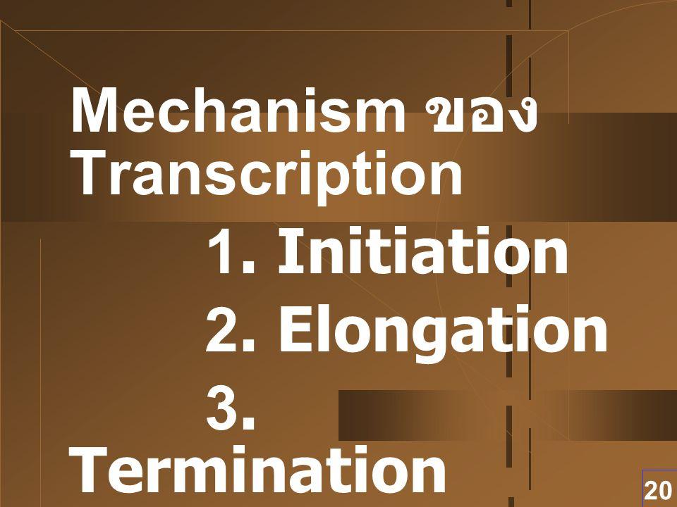 20 Mechanism ของ Transcription 1. Initiation 2. Elongation 3. Termination