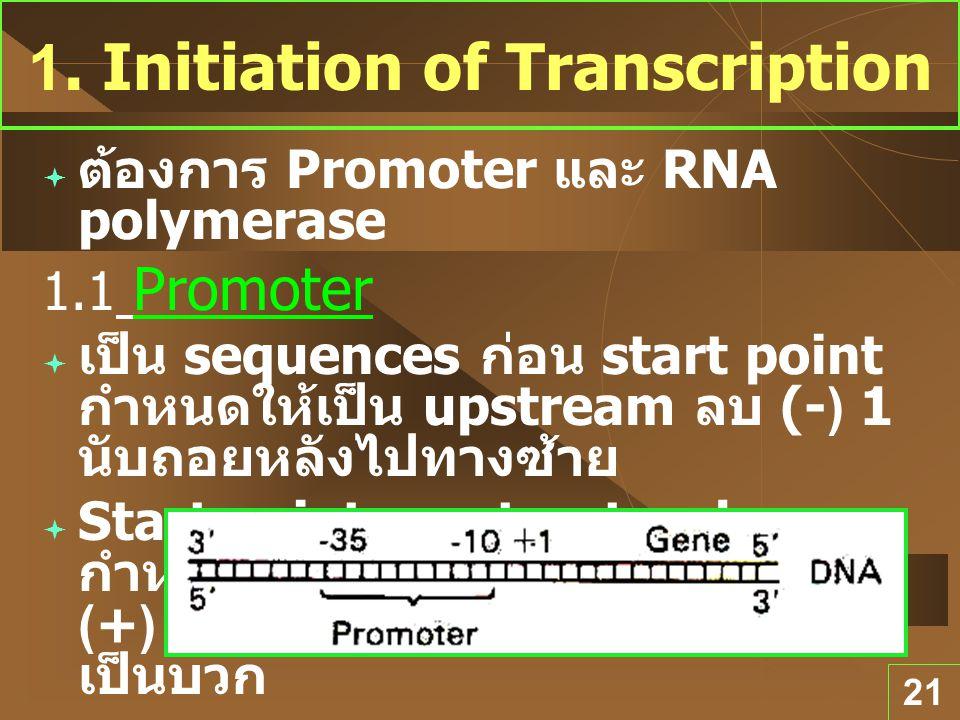21 1. Initiation of Transcription  ต้องการ Promoter และ RNA polymerase 1.1 Promoter  เป็น sequences ก่อน start point กำหนดให้เป็น upstream ลบ (-) 1