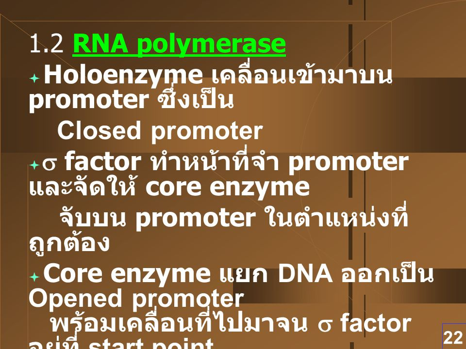 22 1.2 RNA polymerase  Holoenzyme เคลื่อนเข้ามาบน promoter ซึ่งเป็น Closed promoter   factor ทำหน้าที่จำ promoter และจัดให้ core enzyme จับบน prom