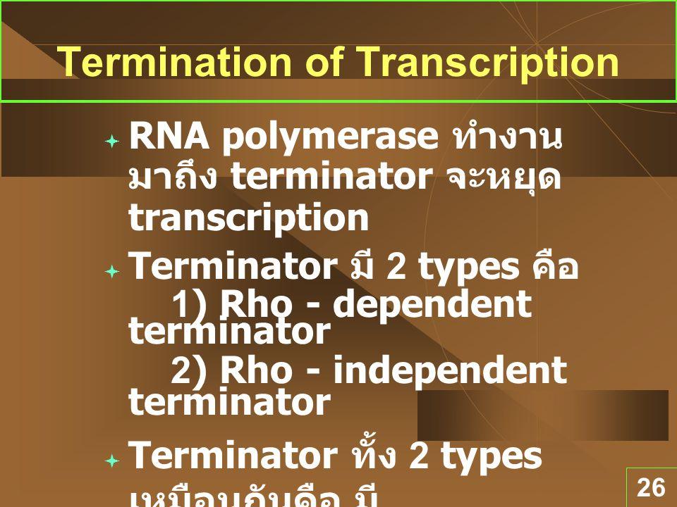 26 Termination of Transcription  RNA polymerase ทำงาน มาถึง terminator จะหยุด transcription  Terminator มี 2 types คือ 1) Rho - dependent terminator