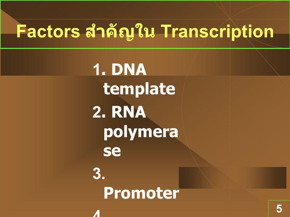 5 Factors สำคัญใน Transcription 1. DNA template 2. RNA polymera se 3. Promoter 4. Terminat or