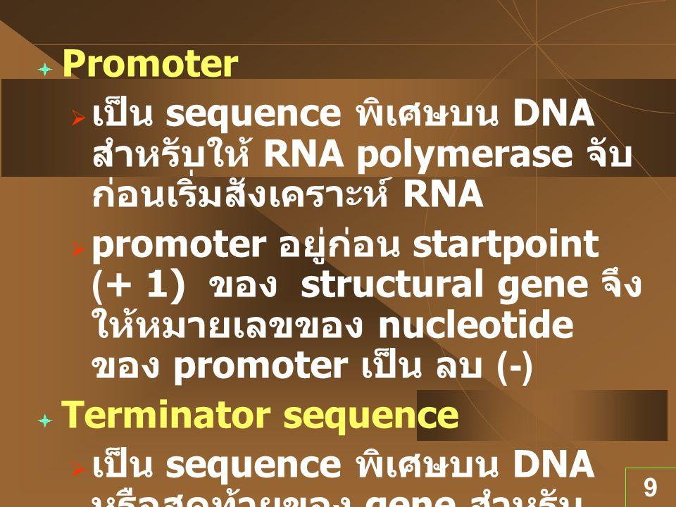 9  Promoter  เป็น sequence พิเศษบน DNA สำหรับให้ RNA polymerase จับ ก่อนเริ่มสังเคราะห์ RNA  promoter อยู่ก่อน startpoint (+ 1) ของ structural gene