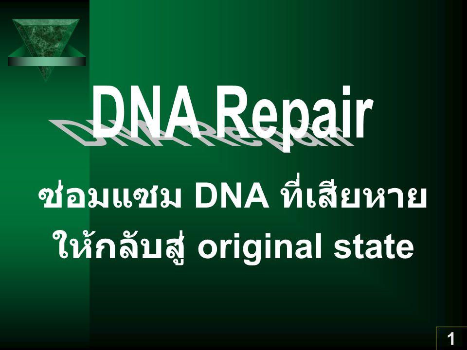 2 Mechanisms ของ DNA Repair I.True repair กำจัด defective DNA ทั้งหมด 1.