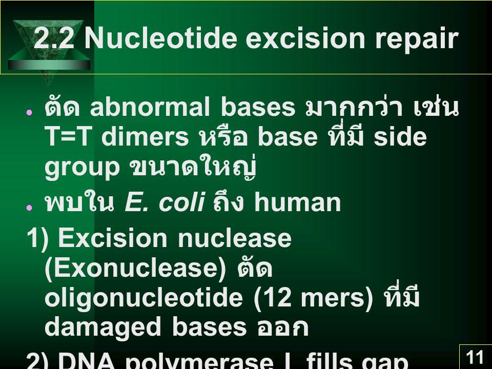 11 2.2 Nucleotide excision repair ตัด abnormal bases มากกว่า เช่น T=T dimers หรือ base ที่มี side group ขนาดใหญ่ พบใน E. coli ถึง human 1) Excision nu