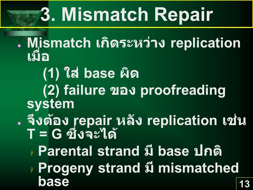 13 3. Mismatch Repair Mismatch เกิดระหว่าง replication เมื่อ (1) ใส่ base ผิด (2) failure ของ proofreading system จึงต้อง repair หลัง replication เช่น