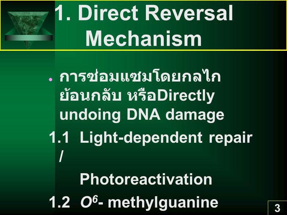 3 1. Direct Reversal Mechanism การซ่อมแซมโดยกลไก ย้อนกลับ หรือ Directly undoing DNA damage 1.1 Light-dependent repair / Photoreactivation 1.2 O 6 - me