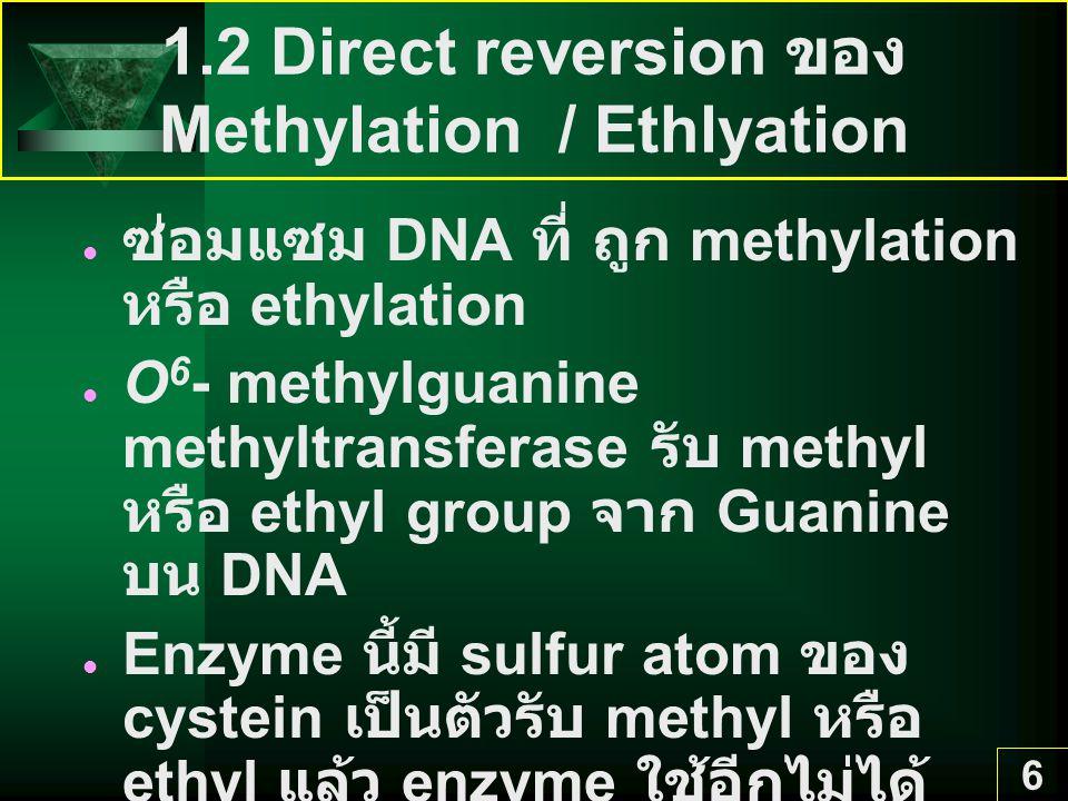 6 1.2 Direct reversion ของ Methylation / Ethlyation ซ่อมแซม DNA ที่ ถูก methylation หรือ ethylation O 6 - methylguanine methyltransferase รับ methyl ห