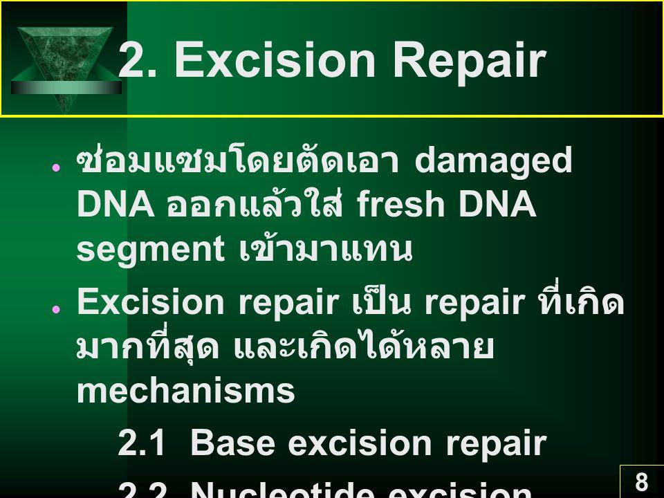 8 2. Excision Repair ซ่อมแซมโดยตัดเอา damaged DNA ออกแล้วใส่ fresh DNA segment เข้ามาแทน Excision repair เป็น repair ที่เกิด มากที่สุด และเกิดได้หลาย