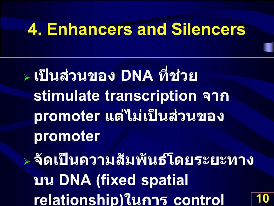 10 4. Enhancers and Silencers  เป็นส่วนของ DNA ที่ช่วย stimulate transcription จาก promoter แต่ไม่เป็นส่วนของ promoter  จัดเป็นความสัมพันธ์โดยระยะทา