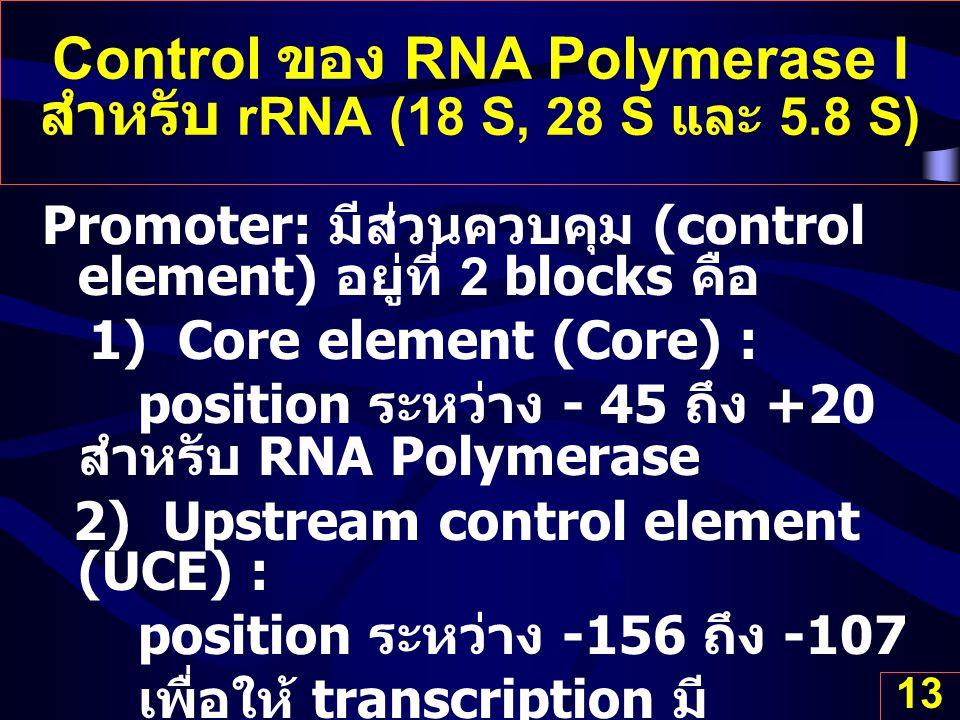 13 Control ของ RNA Polymerase I สำหรับ rRNA (18 S, 28 S และ 5.8 S) Promoter: มีส่วนควบคุม (control element) อยู่ที่ 2 blocks คือ 1) Core element (Core