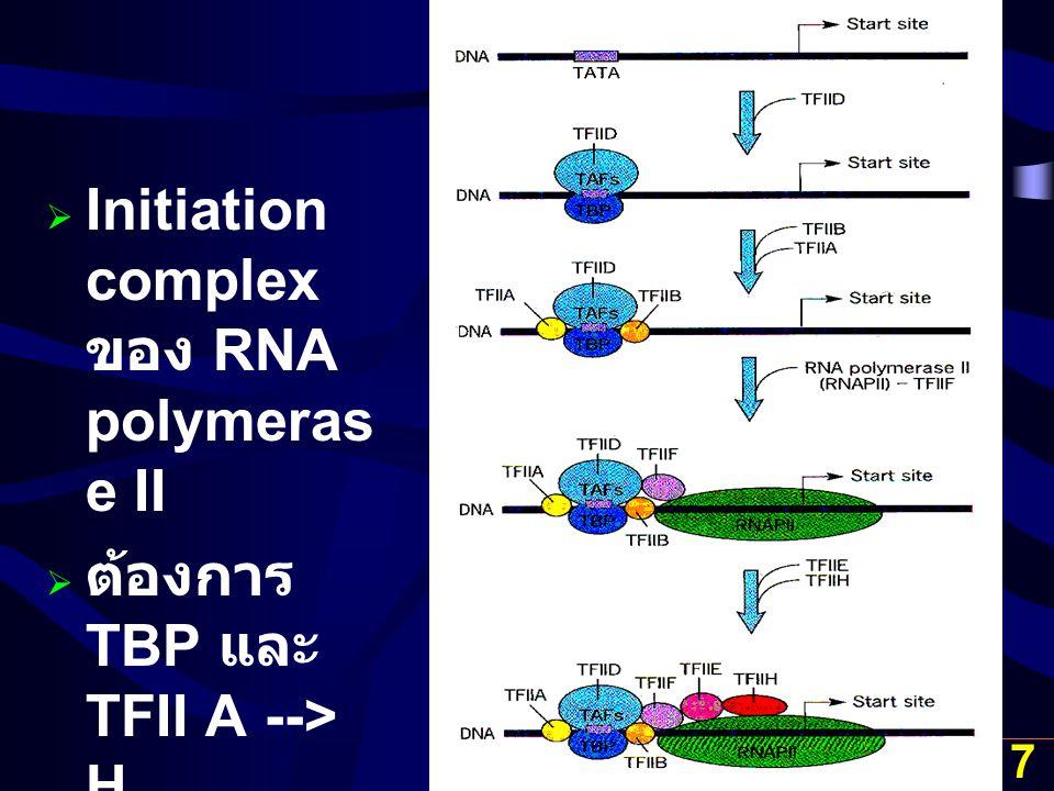 17  Initiation complex ของ RNA polymeras e II  ต้องการ TBP และ TFII A --> H
