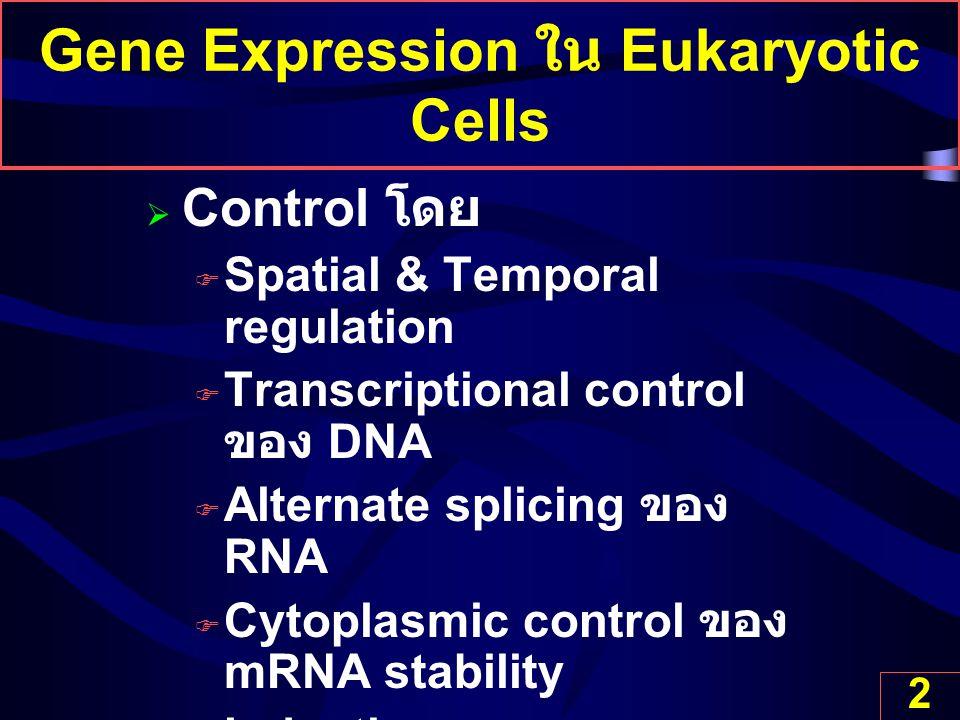 2 Gene Expression ใน Eukaryotic Cells  Control โดย  Spatial & Temporal regulation  Transcriptional control ของ DNA  Alternate splicing ของ RNA  C