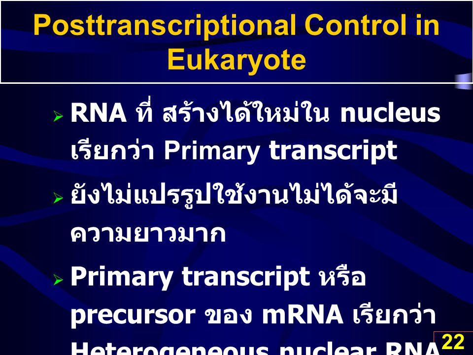 22 Posttranscriptional Control in Eukaryote  RNA ที่ สร้างได้ใหม่ใน nucleus เรียกว่า Primary transcript  ยังไม่แปรรูปใช้งานไม่ได้จะมี ความยาวมาก  P