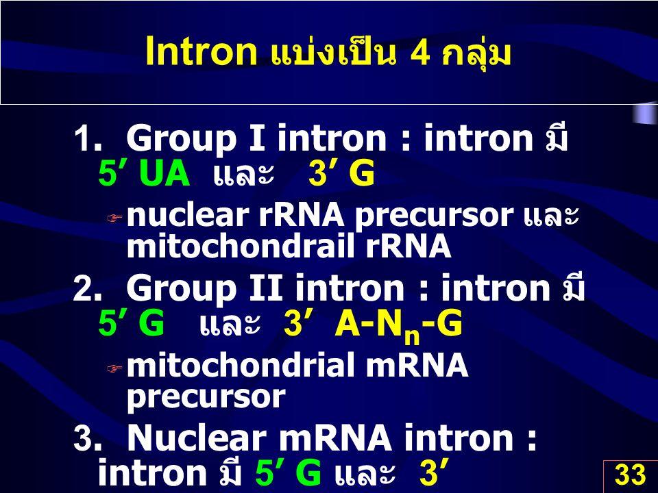 33 Intron แบ่งเป็น 4 กลุ่ม 1. Group I intron : intron มี 5' UA และ 3' G  nuclear rRNA precursor และ mitochondrail rRNA 2. Group II intron : intron มี