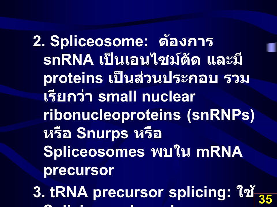 35 2. Spliceosome: ต้องการ snRNA เป็นเอนไซม์ตัด และมี proteins เป็นส่วนประกอบ รวม เรียกว่า small nuclear ribonucleoproteins (snRNPs) หรือ Snurps หรือ