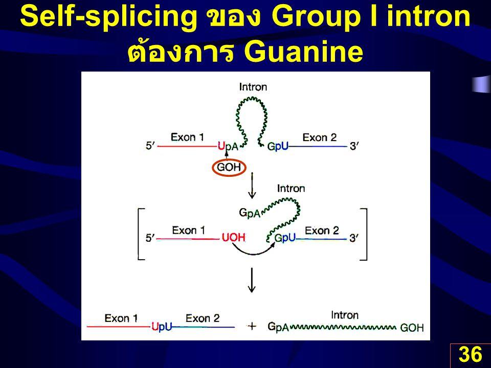 36 Self-splicing ของ Group I intron ต้องการ Guanine