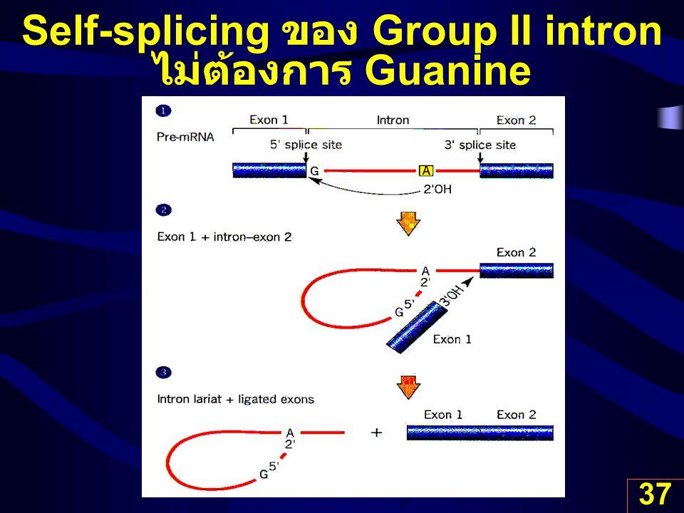 37 Self-splicing ของ Group II intron ไม่ต้องการ Guanine