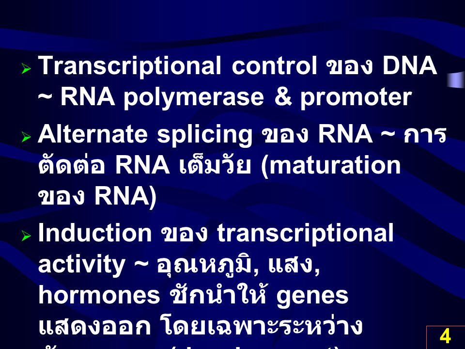 4  Transcriptional control ของ DNA ~ RNA polymerase & promoter  Alternate splicing ของ RNA ~ การ ตัดต่อ RNA เต็มวัย (maturation ของ RNA)  Induction